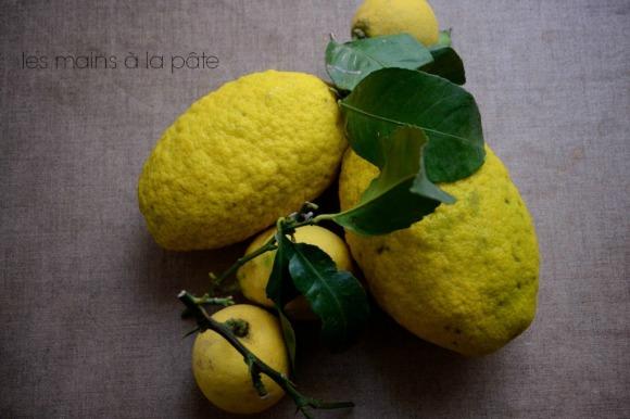 cédrats et citrons